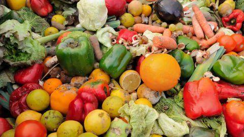 Pozdravljamo organizacije in projekte, kjer užitno a zavrženo hrano rešujejo pred smetnjakom