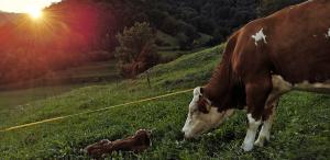 Ekološka kmetija Pr'Laškarju